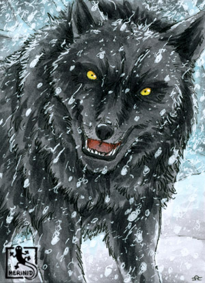 Wolf - Raubwild