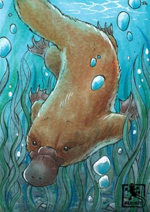 Platypus - Schnabeltier